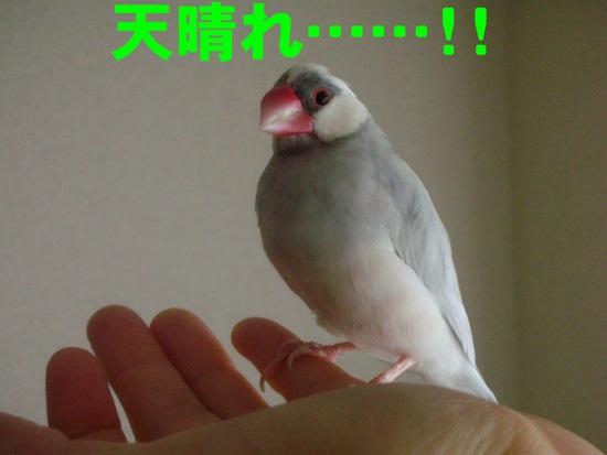 褒めてどうするの~!!
