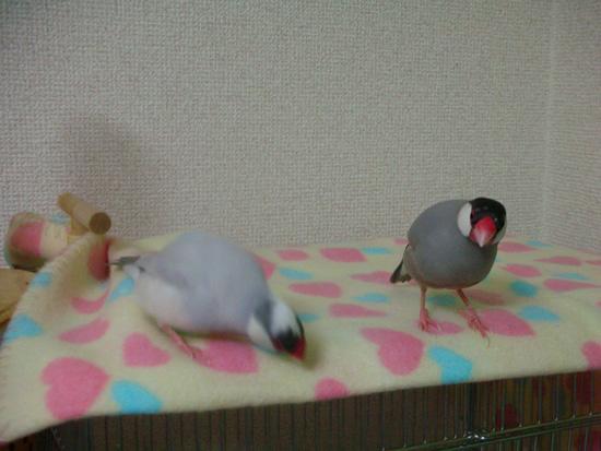 銀と京ツーショット