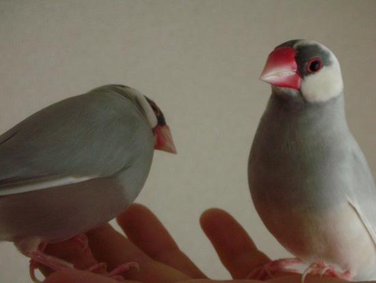 朝の放鳥デート