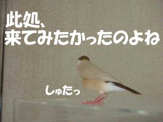 風のケースじゃん!!