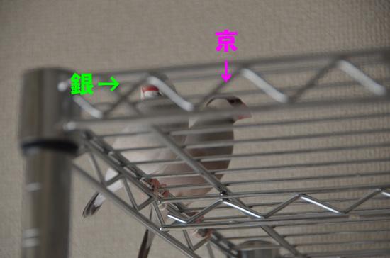 銀と京^_^;