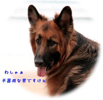IMG_030.jpg