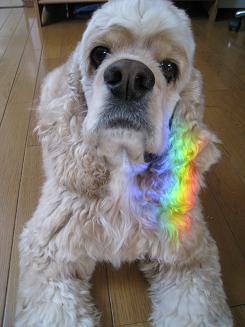 little and rainbow