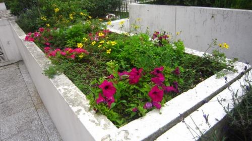 6月26日家庭菜園