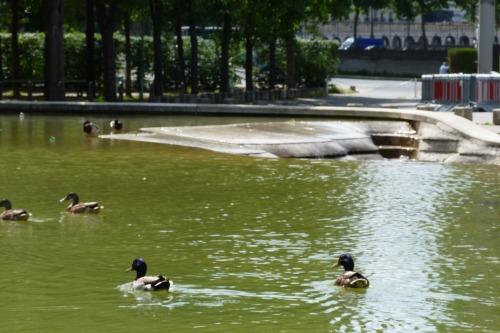ベルシー公園6月23日