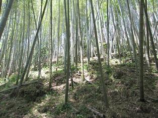 タケノコ山1