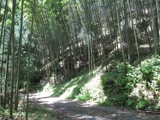 タケノコ山2