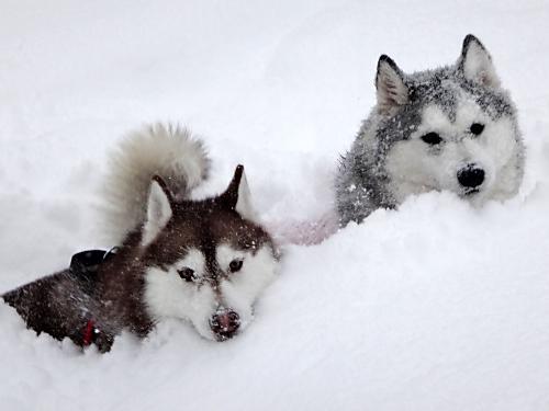 雪まみれセリーナ葉月