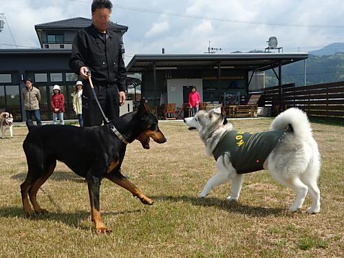クーロス王子VS看板犬MAX