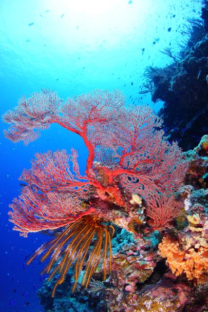 海中風景2