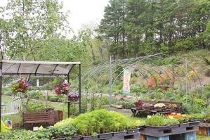 kobo-garden.jpg