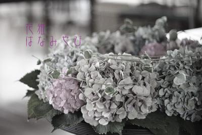 IMG_2658_edited-1のコピー