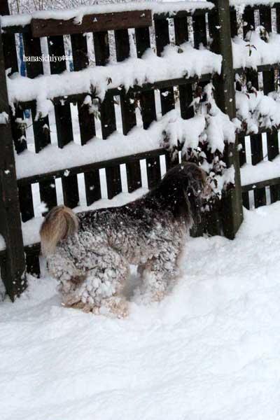雪の中で走るレオン