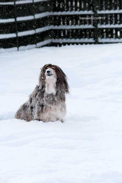 レオン雪まみれ