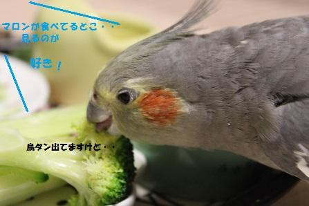 食べ続けてる・・