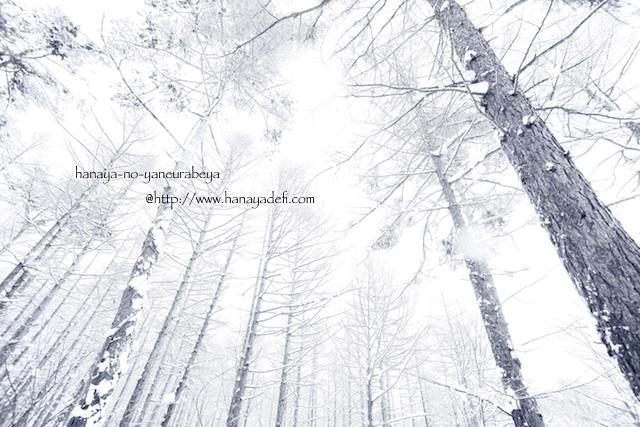 IMG_8123640.jpg