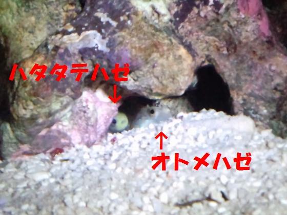 2012111603.jpg