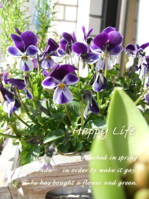 Happy Life-2012022701