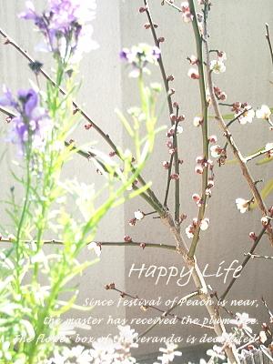 Happy Life-2012022703