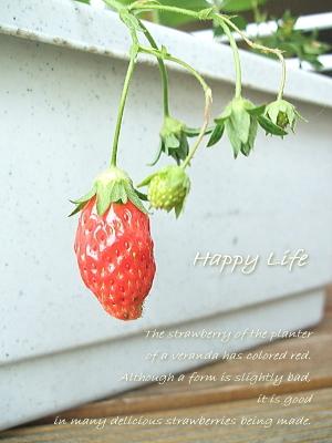 Happy Life-2012051701