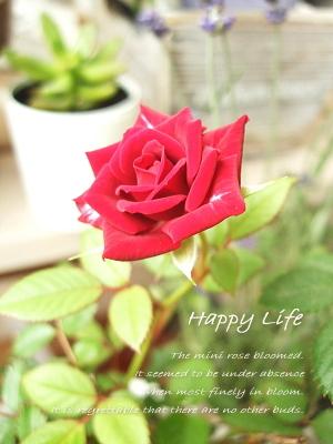 Happy Life-2012071801