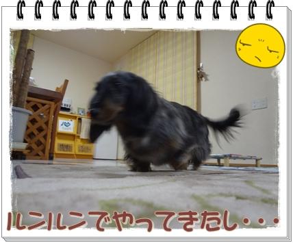 20120526-3.jpg