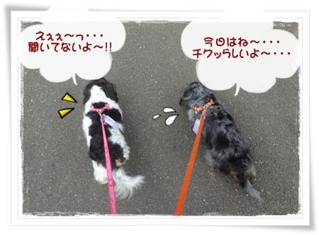 20120527-1.jpg