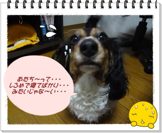 20120609-1.jpg