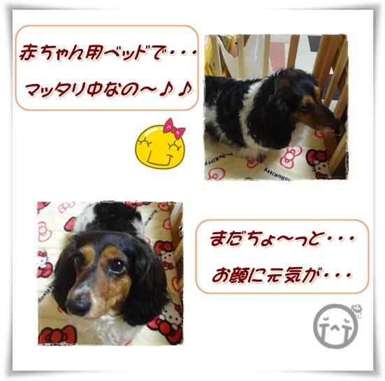 20120613-3.jpg