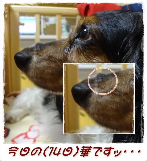 20120614-3.jpg