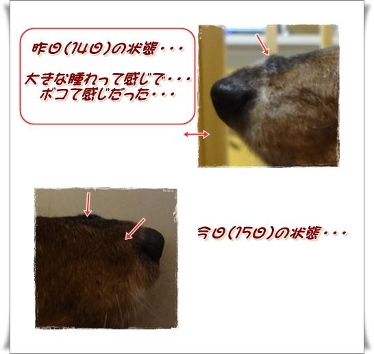 20120615-1.jpg
