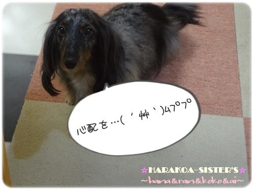 20120921-4.jpg