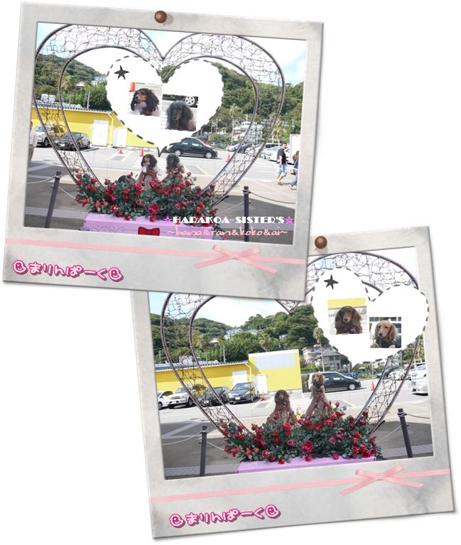 20121108-2.jpg