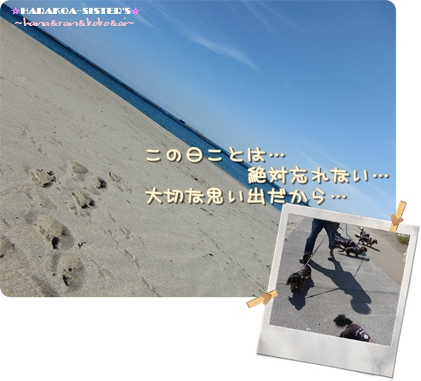 20121110-7.jpg
