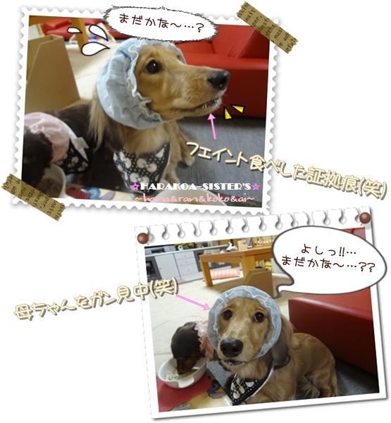 20121114-2.jpg