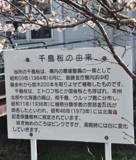 お花見5jpg