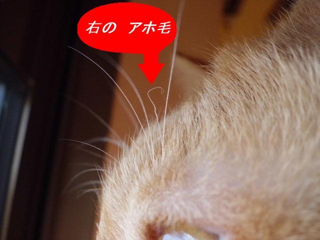 CIMG3888_edited.jpg