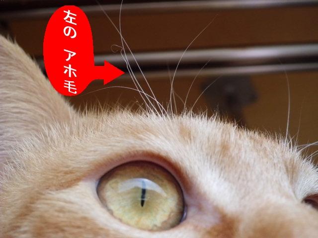 CIMG3893_edited.jpg