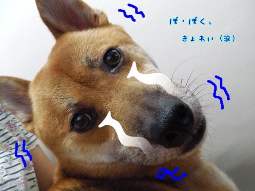 002_20120721140219.jpg