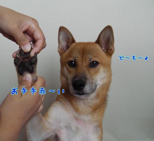 004_20120805151157.jpg