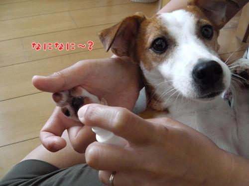 009_20120805151155.jpg