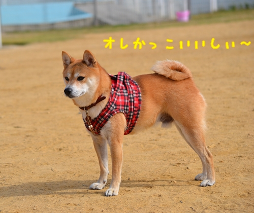 227_20121108220219.jpg
