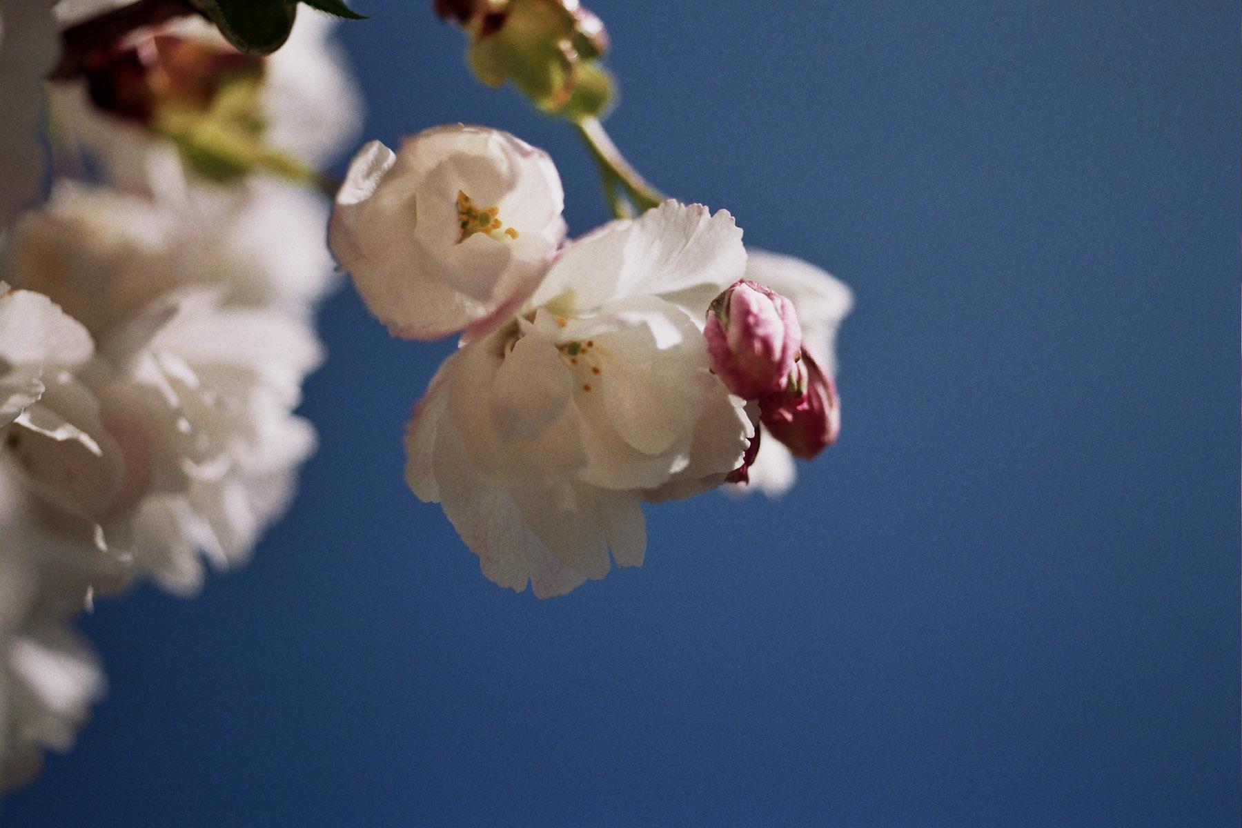 20120401_123859_F4s_Nikon55mm.jpg