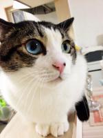 cat11041.jpg