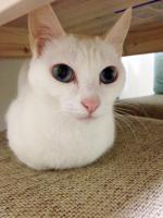cat11042.jpg