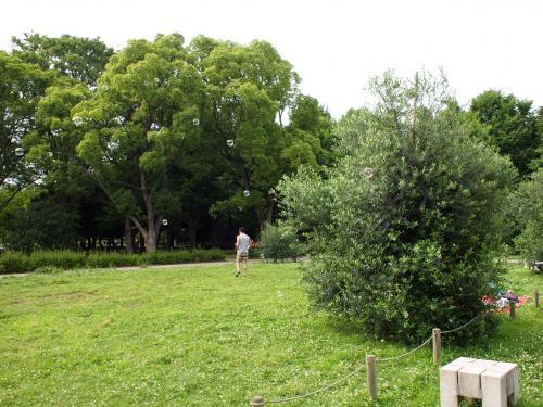 代々木公園へ行く。続編。