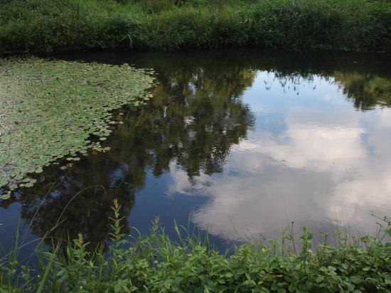 水生植物園へ行く。