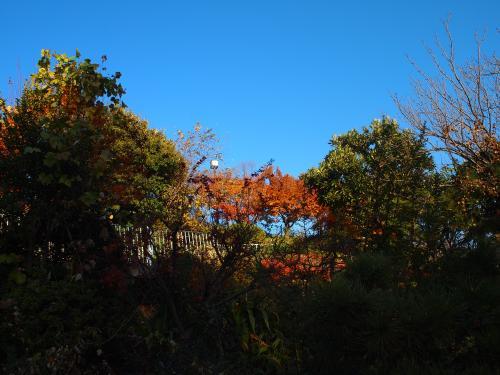 西郷山公園へ行く。