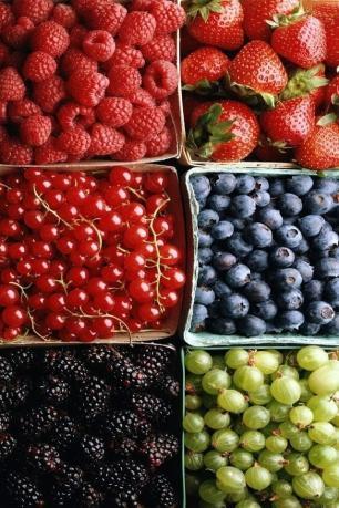 果物・ベリー