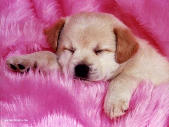ピンク・犬